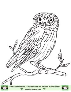 Owl Coloring Pages Lucy Learns Owl Coloring Page Elf Owl Pictures