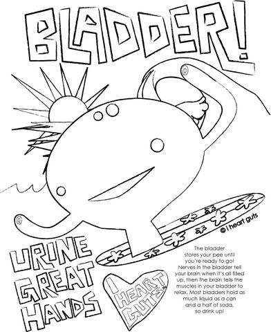 Free And Super Fun Bladder Colouring Page These Would Be Great To