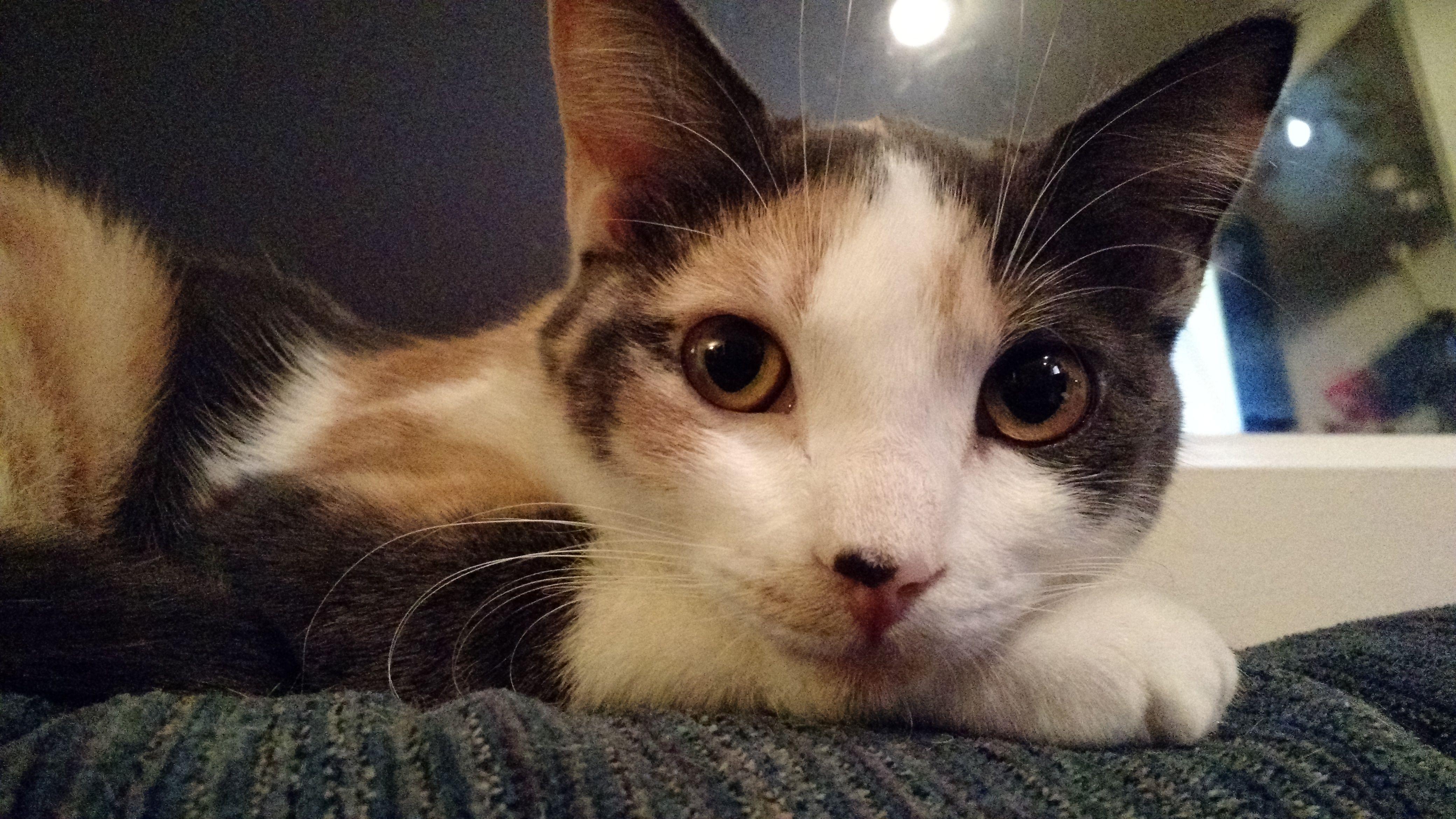 My kitten giving me big eyes... Little kittens, Cute