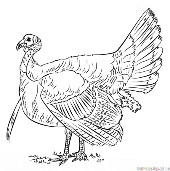 How To Draw A Turkey Step By Step Drawing Tutorials Turkey Coloring Pages Bird Drawings Drawing Tutorial