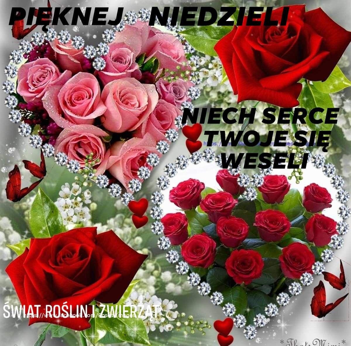 Pin By Jozef On Niedziela Rose Flower Wallpaper Beautiful Rose Flowers Beautiful Roses