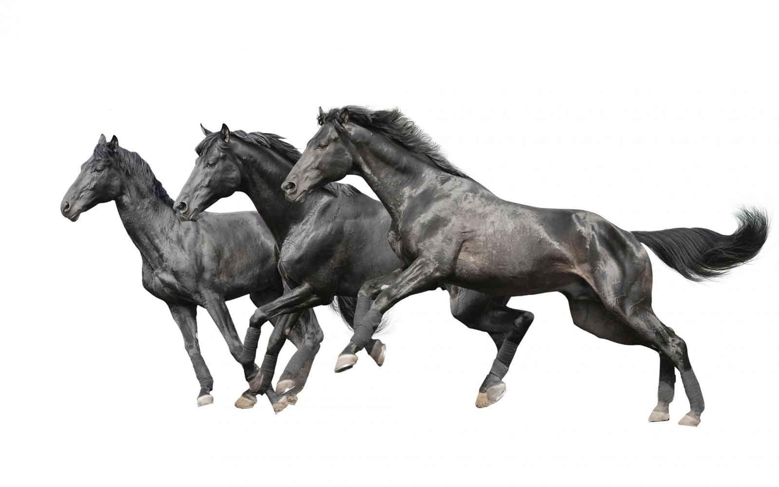 Fantastic Wallpaper Horse Collage - 588a552fb2c29e64c8b197d3bea676bd  Collection_266869.jpg