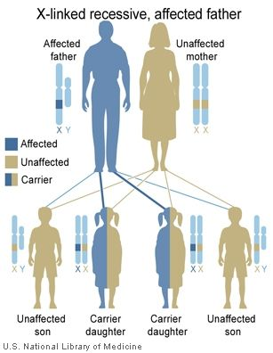 Main Inheritance Patterns Genes In Life Dna Genetics Biology
