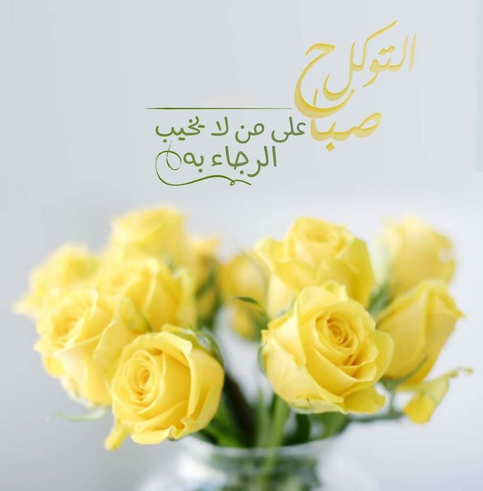 Pin By Abrar Jawad On Pinterest Yellow Roses Yellow