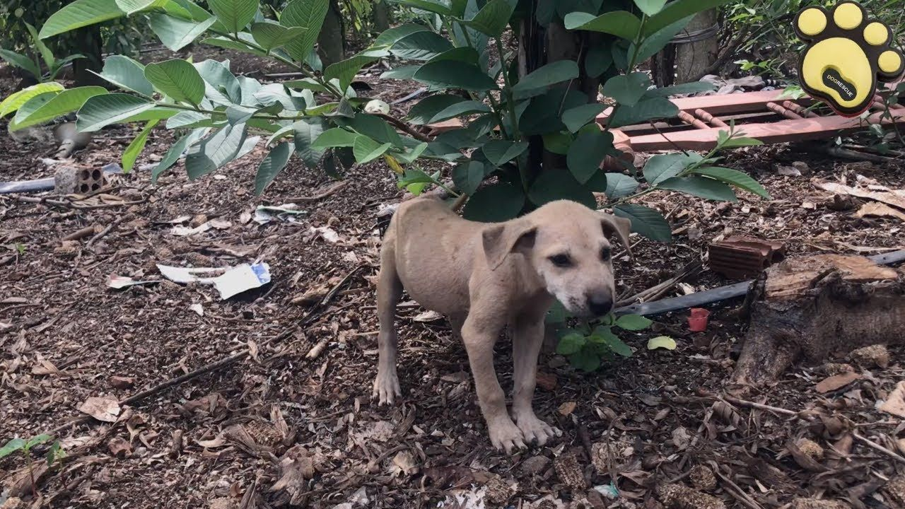 Poor Abandoned Puppy Crying All Night Long Dog Rescue Stories