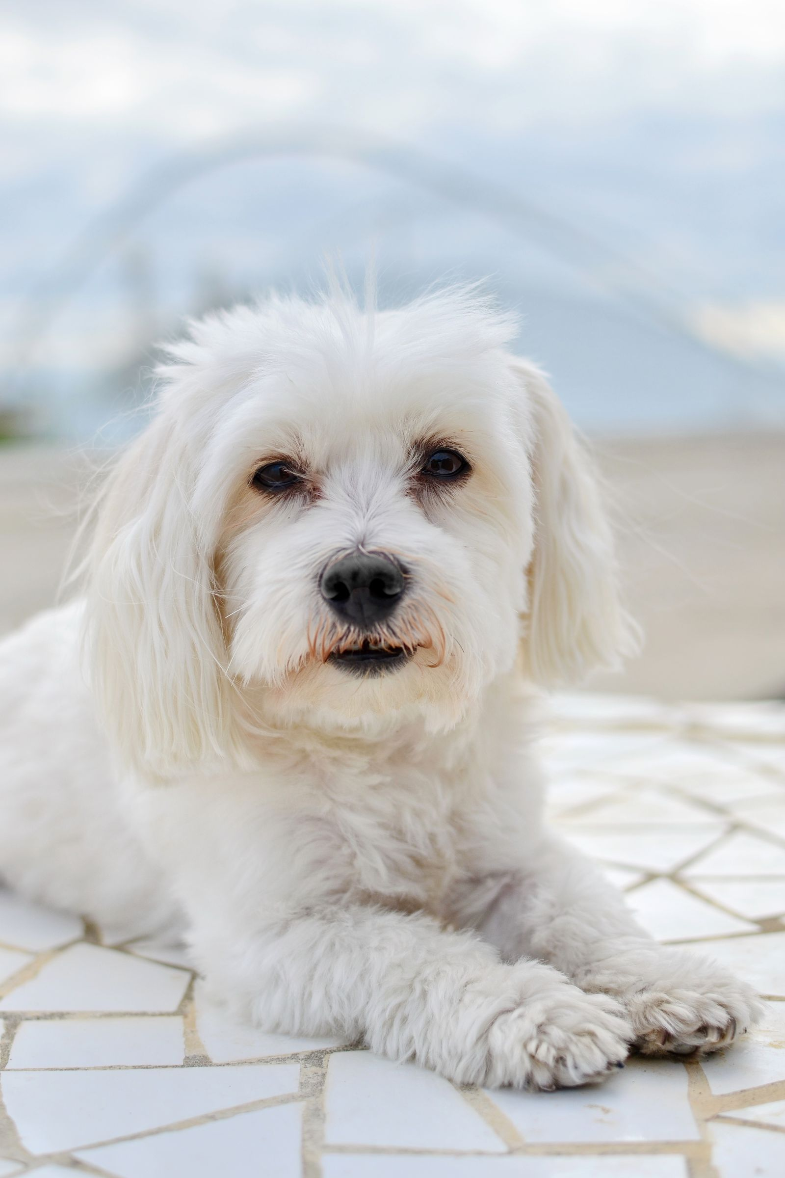 Adopt One Of These 20 Types Of Hypoallergenic Dogs For Endless Cuddles Small Dog Breeds Miniature Dog Breeds Best Small Dogs