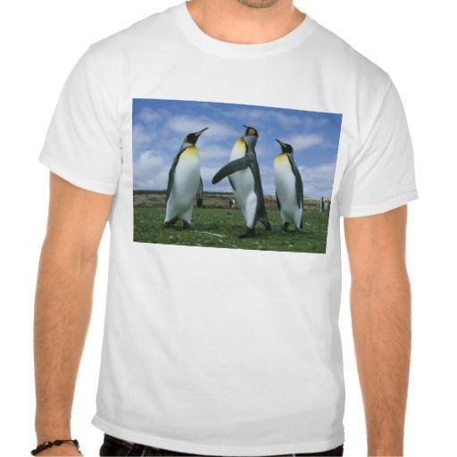 King Penguins, Aptenodytes patagonicus), T Shirt, Hoodie Sweatshirt