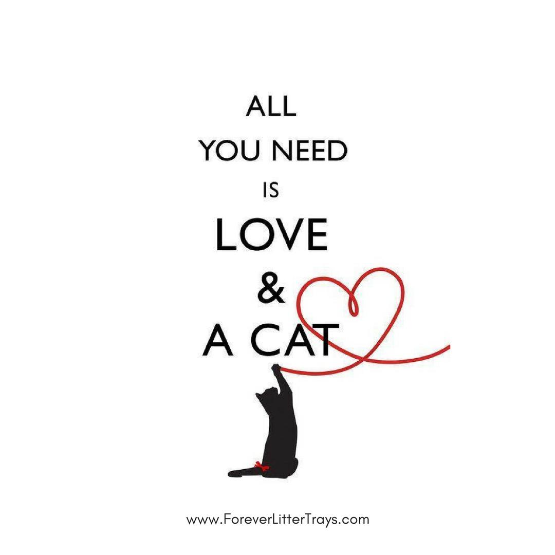 Cat Quotes Catlovers