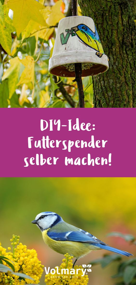 DIY-Idee: Futterspender selber machen!