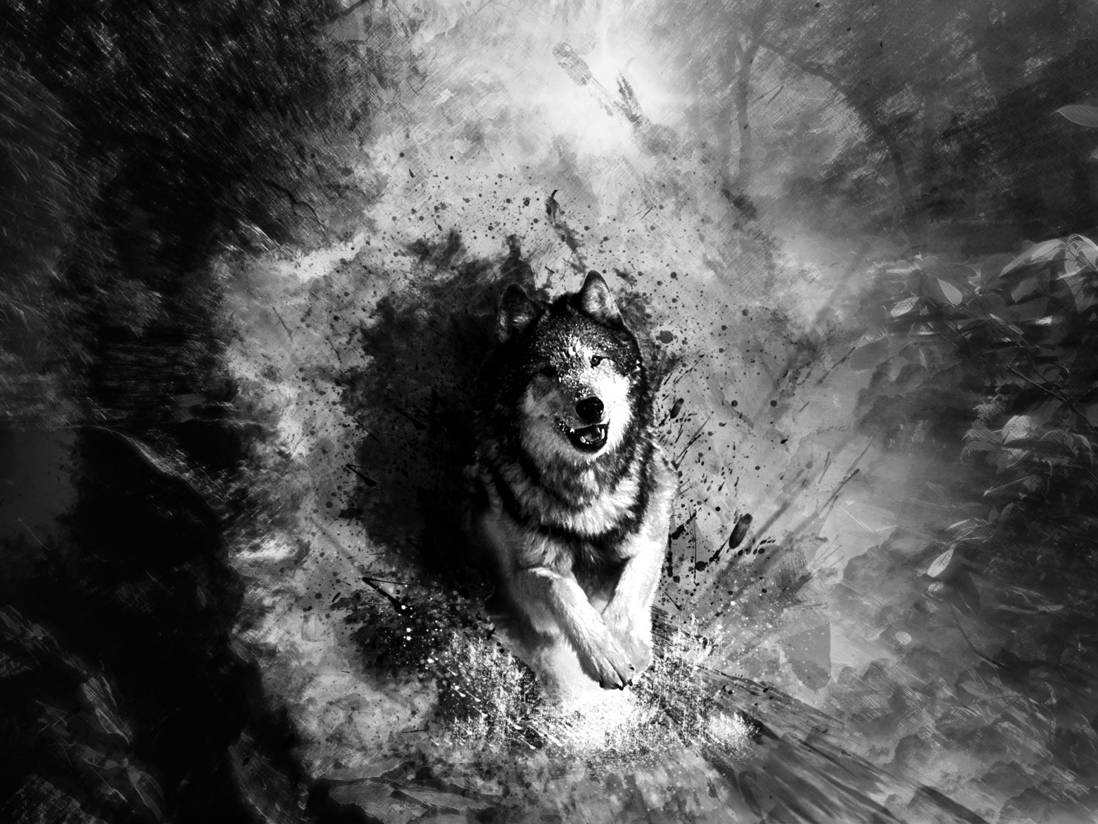 Hd wallpaper wolf - Abstract Art Black And White Wolf Hd Pictures 4 High Definition Wallpapers Hd