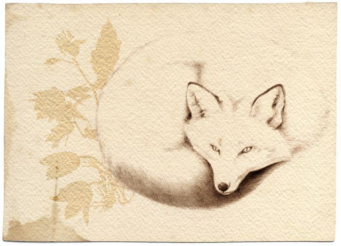White Fox Rustic Papyrus Fox Symbolism White Fox Fox