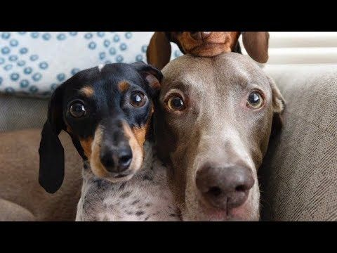 READY to LAUGH? FUNNIEST DOG compilation EVER - Funny DOG compilationDogs are our best and funniest friends! I bet you will laugh out loud while watching this. Hope you like our compilation, please share it and SUBSCRIB... #animals #animalsfunny #animalsquotesfunny #cat #catsanddogs #compilation #cutefunnyanimals #dogcat #DOGS #dogsfunny #funniest #funny #funnyanimals #funnyanimalsmemes...