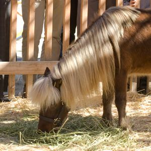 You got: Li'l Sebastian You are a warrior. You are strong ...