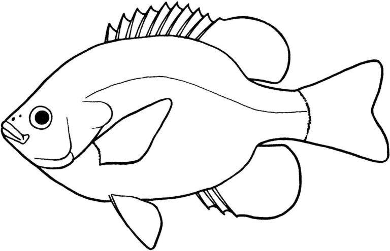 Fish Black And White Clip Art Images Download 2019 Kartun Tutorial Gambar Kartun Gambar Kartun