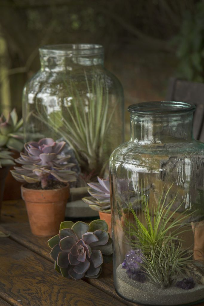 Terrarium and Succulents Wedding Decor | por Ken Marten