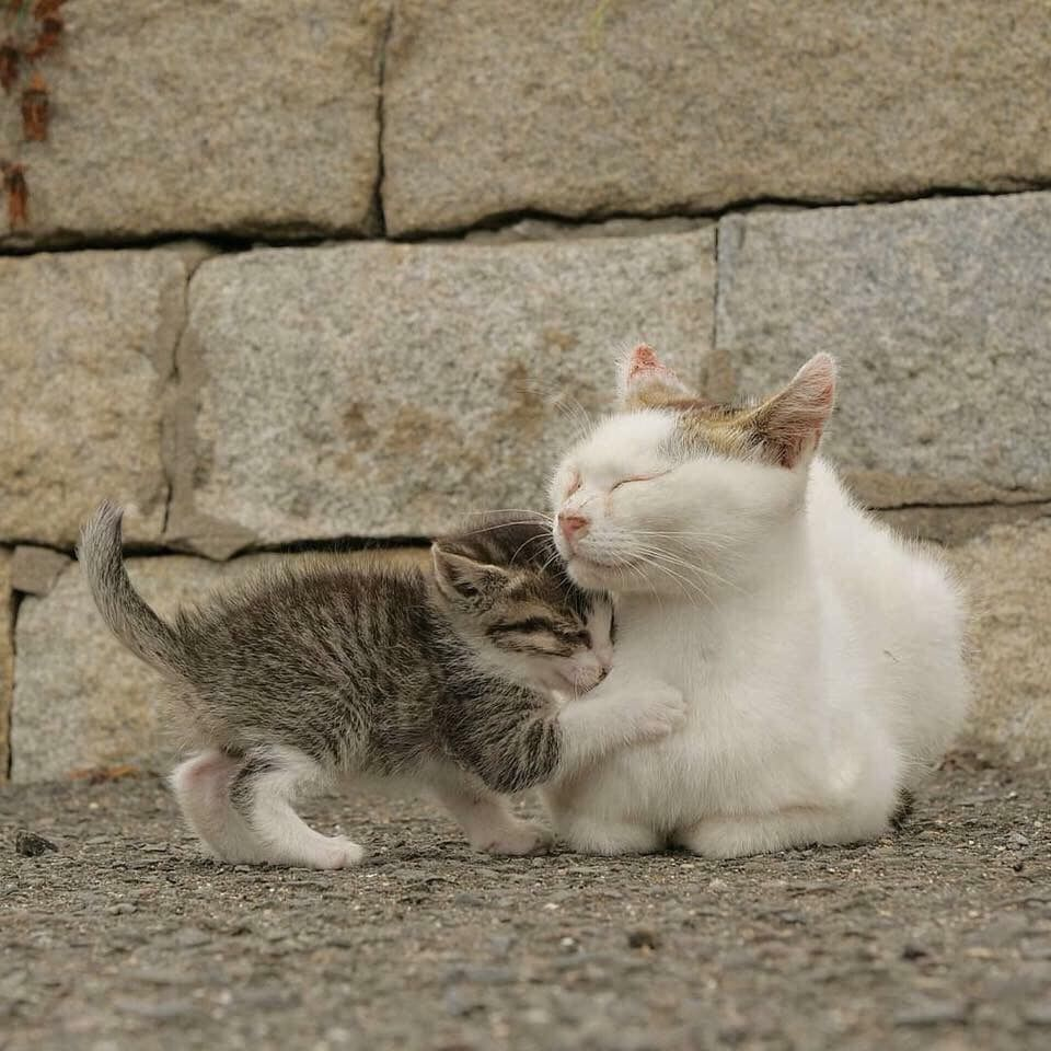 Pin By Jess Pereira On Animals Cats And Kittens Kittens Cute