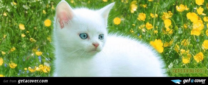 A great Cute kitten facebook cover for your FB timeline. Choose from thousands of new Animals timeline covers with live preview.
