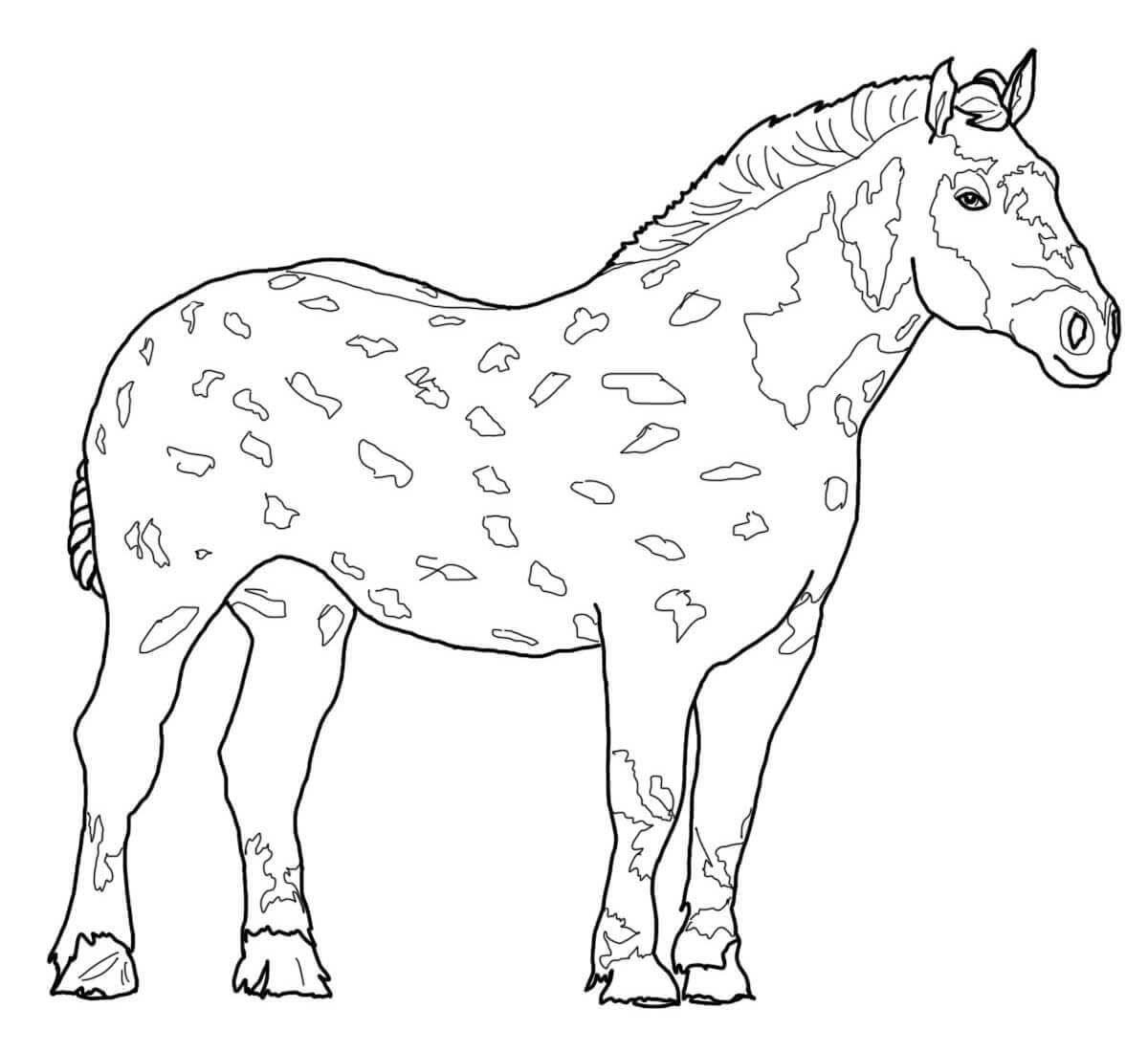 Percheron Horse Coloring Page Horse Coloring Bird Coloring Pages Horse Coloring Pages [ 1100 x 1200 Pixel ]