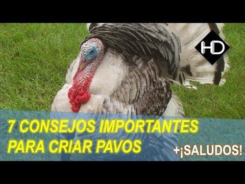15 Ideas De Animales Gallineros Criar Gallinas Gallinas Ponedoras