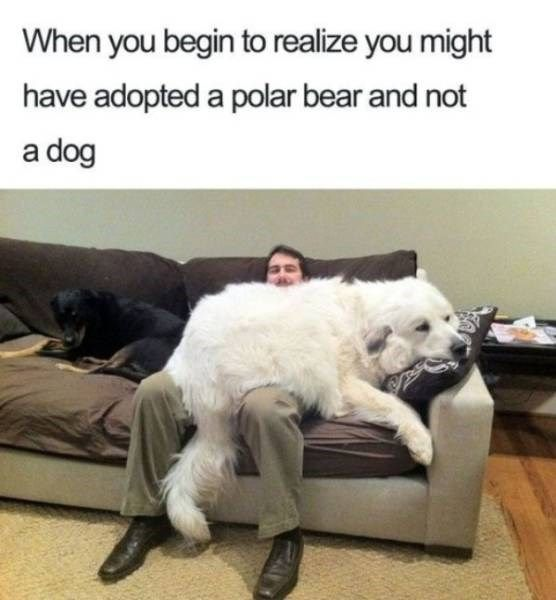 New Funny Dogs 33 Doggo Memes And Tweets That'll Help You Through This Ruff Week 33 Doggo Memes And Tweets That'll Help You Through This Ruff Week 4
