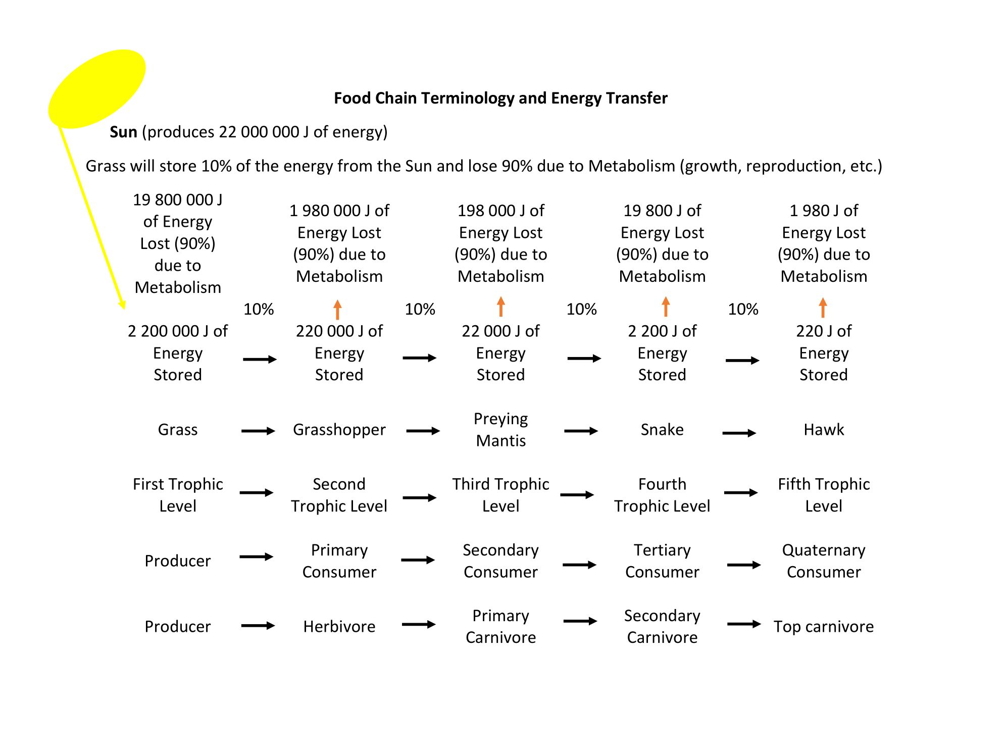 Food Chain Terminology And Energy Transfer