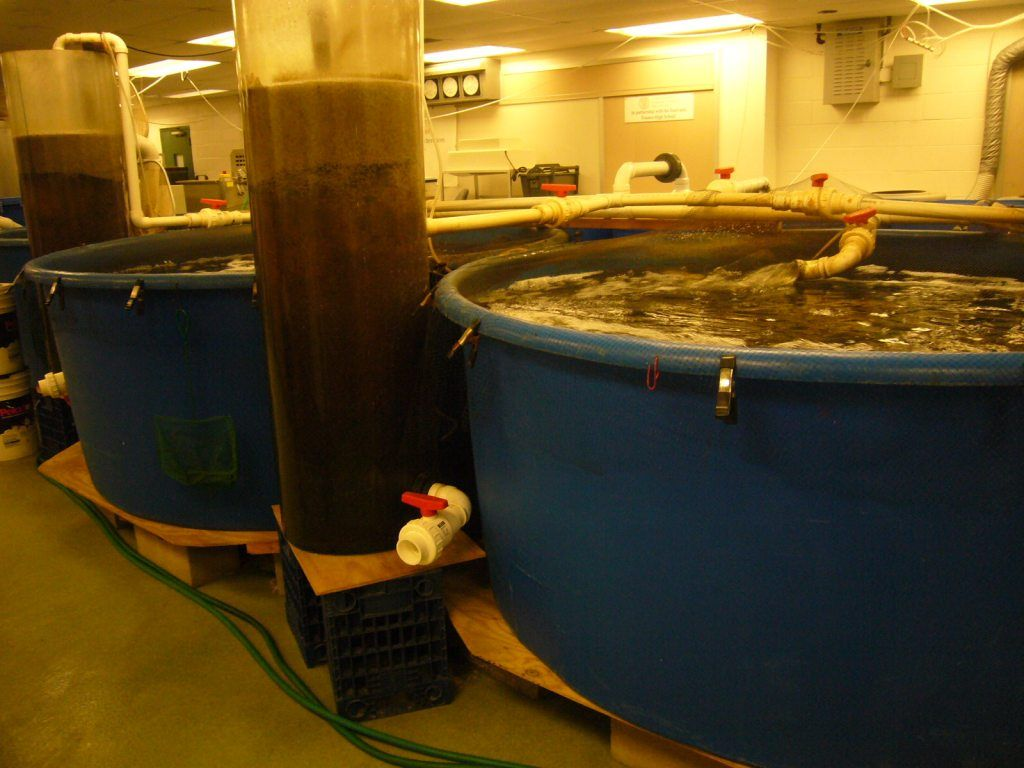 Cornell University Cooperative Extension Aquaponics Learning Lab At