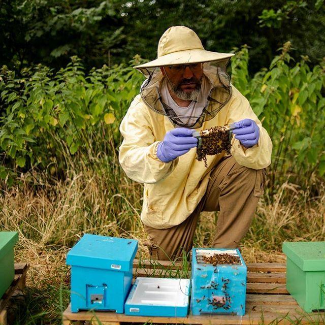 Pin by yz bees on Beekeeping | Beekeeping for dummies, Bee ...