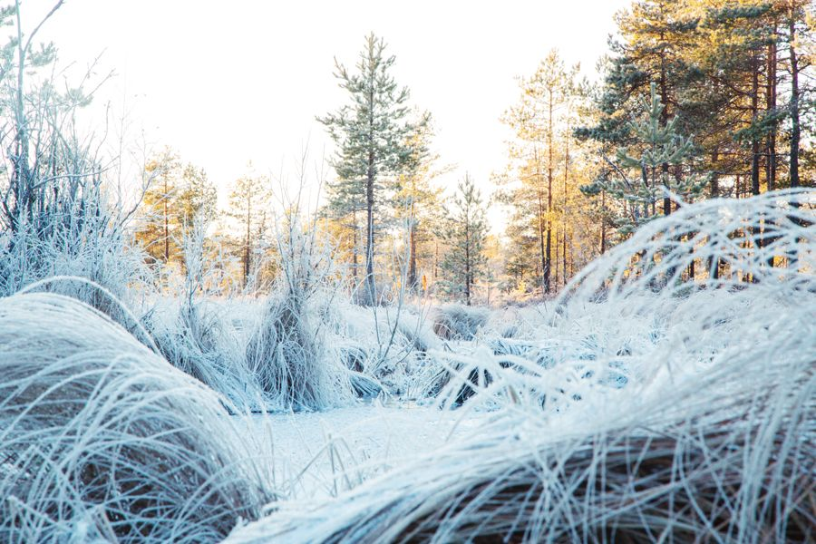 Svante Gullichsen photography: Huurteinen suo