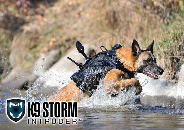 The Dog That Cornered Osama Bin Laden. Good story.