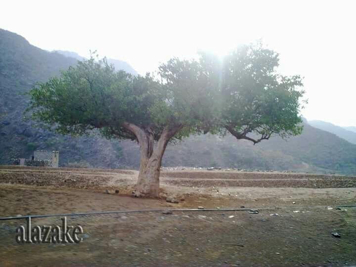 صور من بلادي اليمن المحويت Natural Landmarks Country Roads Nature
