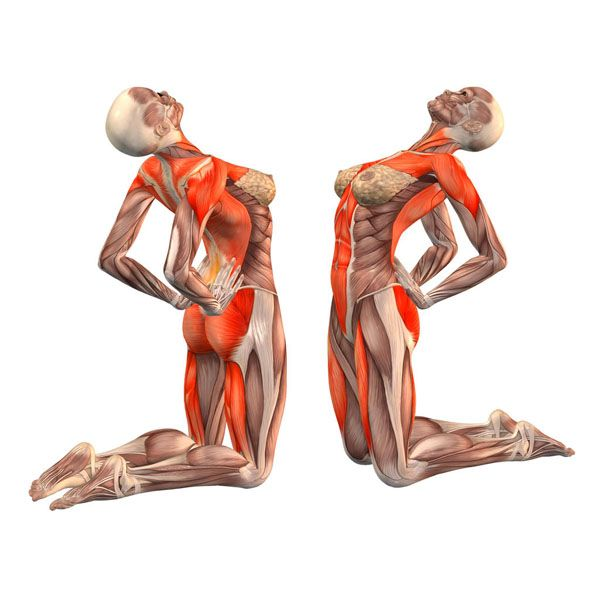 Pin de Ezthella en yoga poses   Pinterest   Yoga, Anatomía y Ejercicios