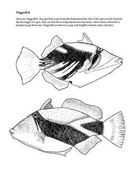 Trigger Fish Coloring Page - Clyde C - Drawings & Illustration ... | 350x270