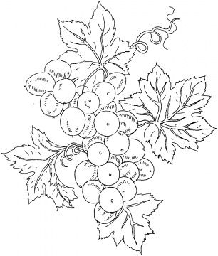 Grape 10 Coloring Page From Grapes Category Select 27001 Printable Crafts Of Cartoons Nature Animals Bible And Many More