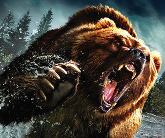 Bear attack angry bear resources pinterest bears for Design attack