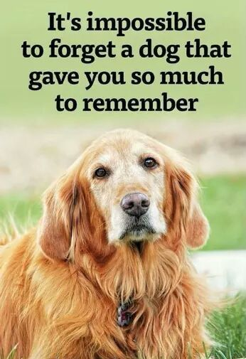 image result for i miss my dog so much it hurts quotes dogs