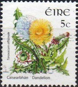 Dandelion, stamp from Ireland. [dandelion, Taraxacum officinale, Asteraceae]