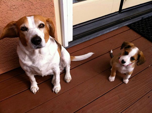 Pup Parent Puppies Pinterest Parents Mom And So Cute - 30 animals cutest parents