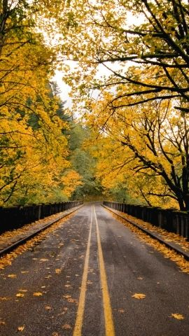 Download Autumn road hd wallpaper for mobile Hd wallpaper