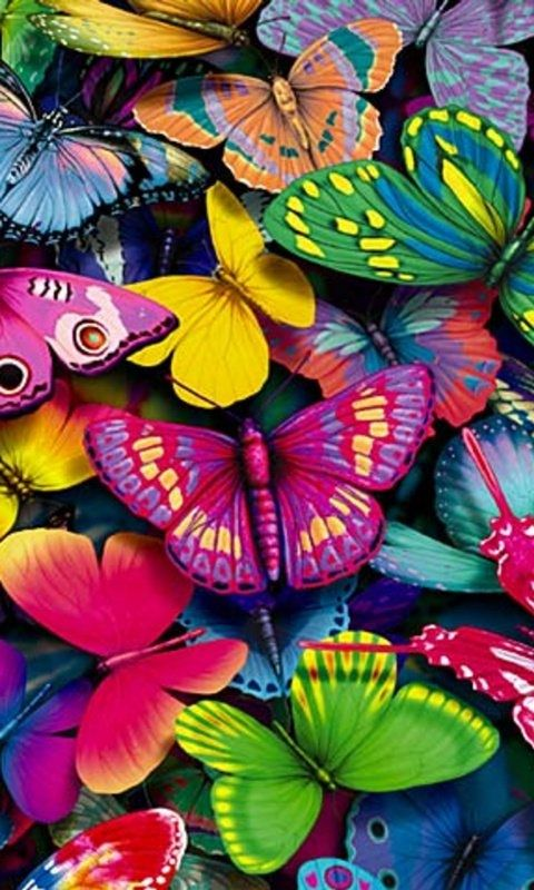 Colorful Butterflies Bright Bold Unique New Wall Art Girls light ...