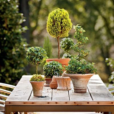 Mix and Match Topiary Tree Sizes | Combine several English ivy topiaries and a clipped lemon cypress to accent a garden table. | SouthernLiving.com