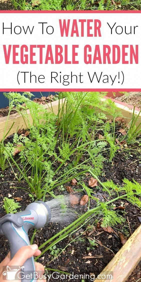 How To Water A Vegetable Garden The Right Way With 400 x 300