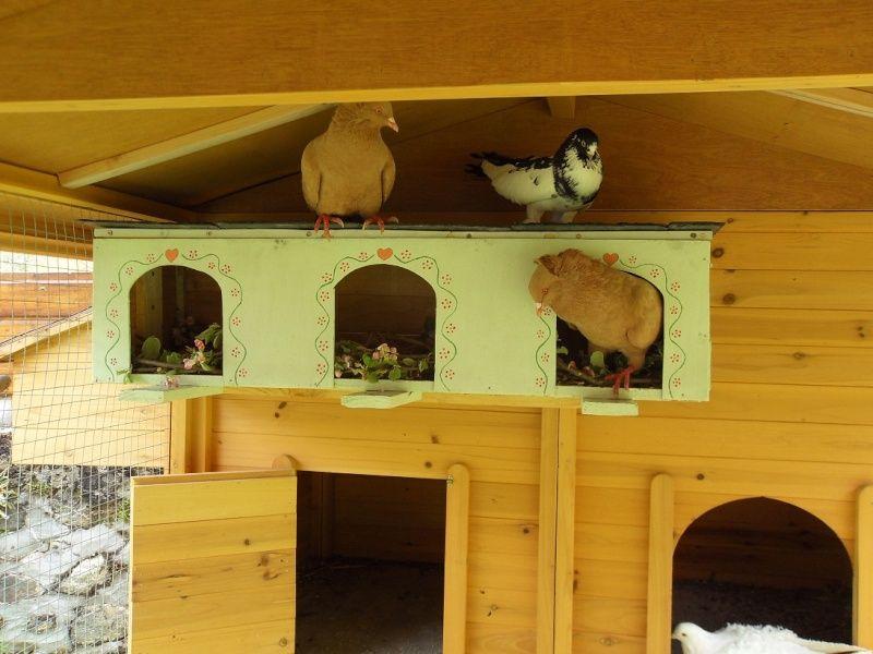 Bricolage Mon Nichoir Pour Pigeon En Photos Nichoir Pigeon Mangeoire Oiseau