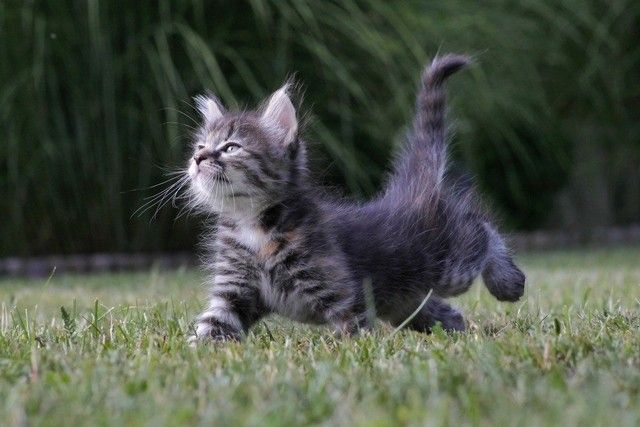 Doesn't this kitten just bring a smile to your face? Precious.