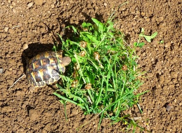 elevage de tortues de terre
