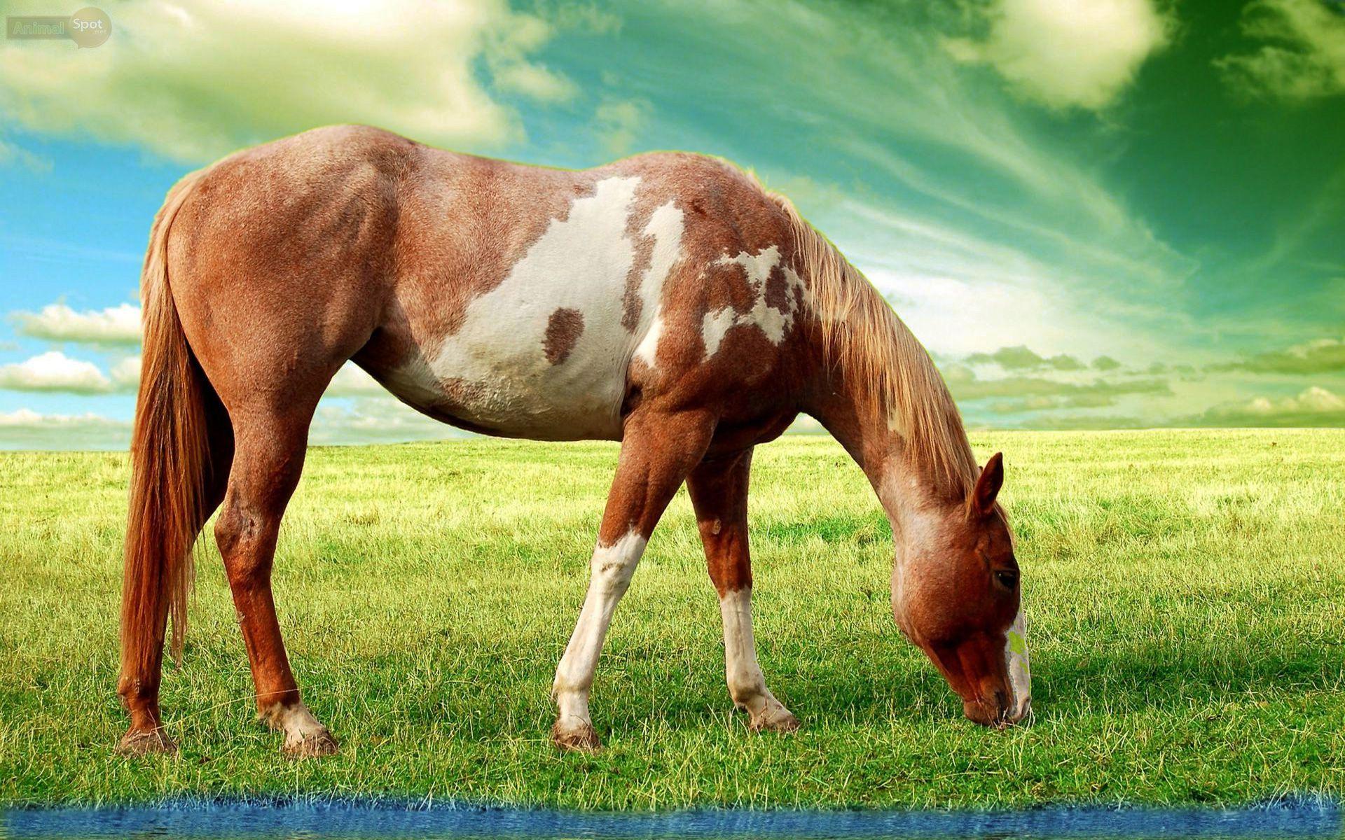 Top Wallpaper Horse Green - 589771b0e9f1edb9bed57860a39f5e92  HD_904310.jpg