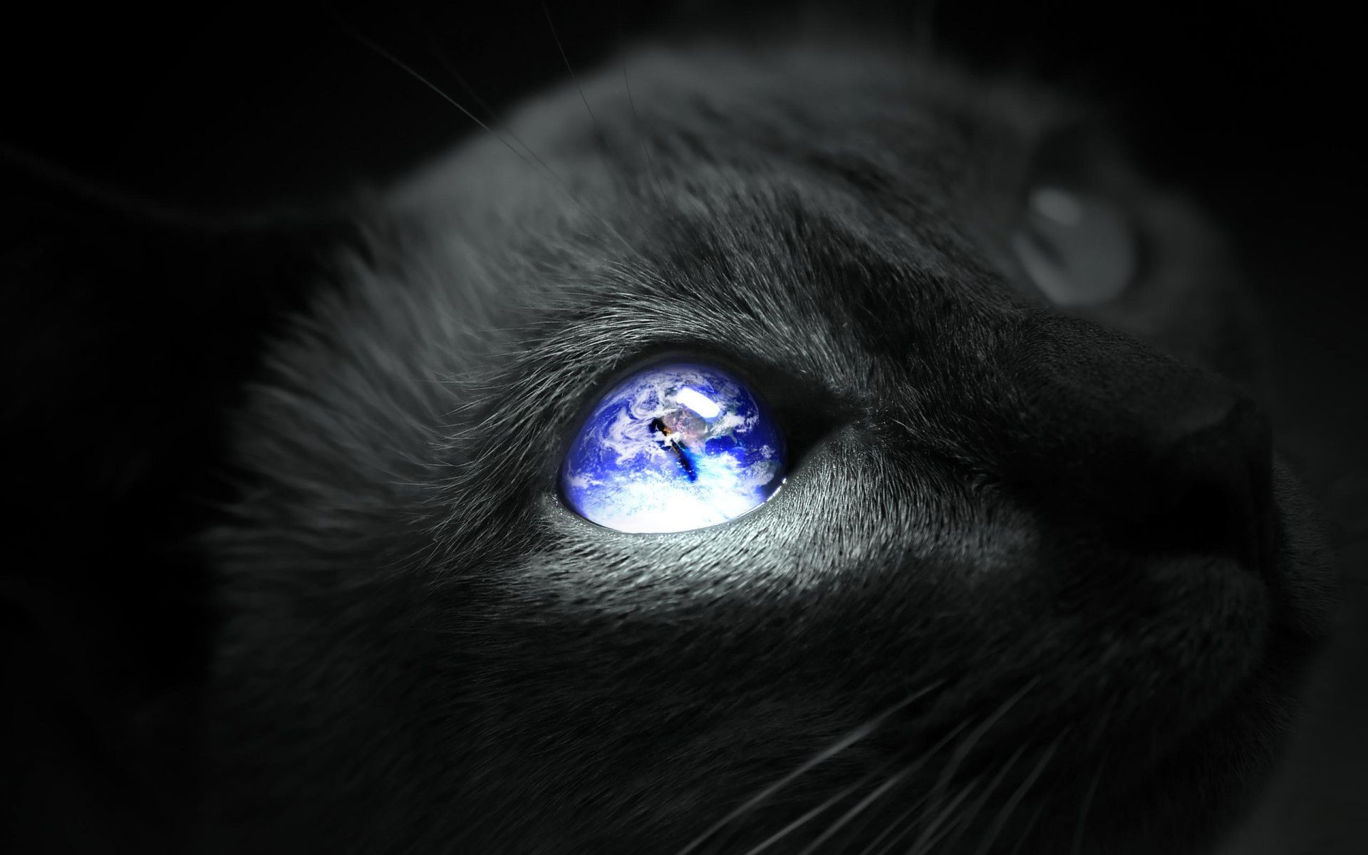 Cat Eye Earth From Eric Toullec profile picture. http