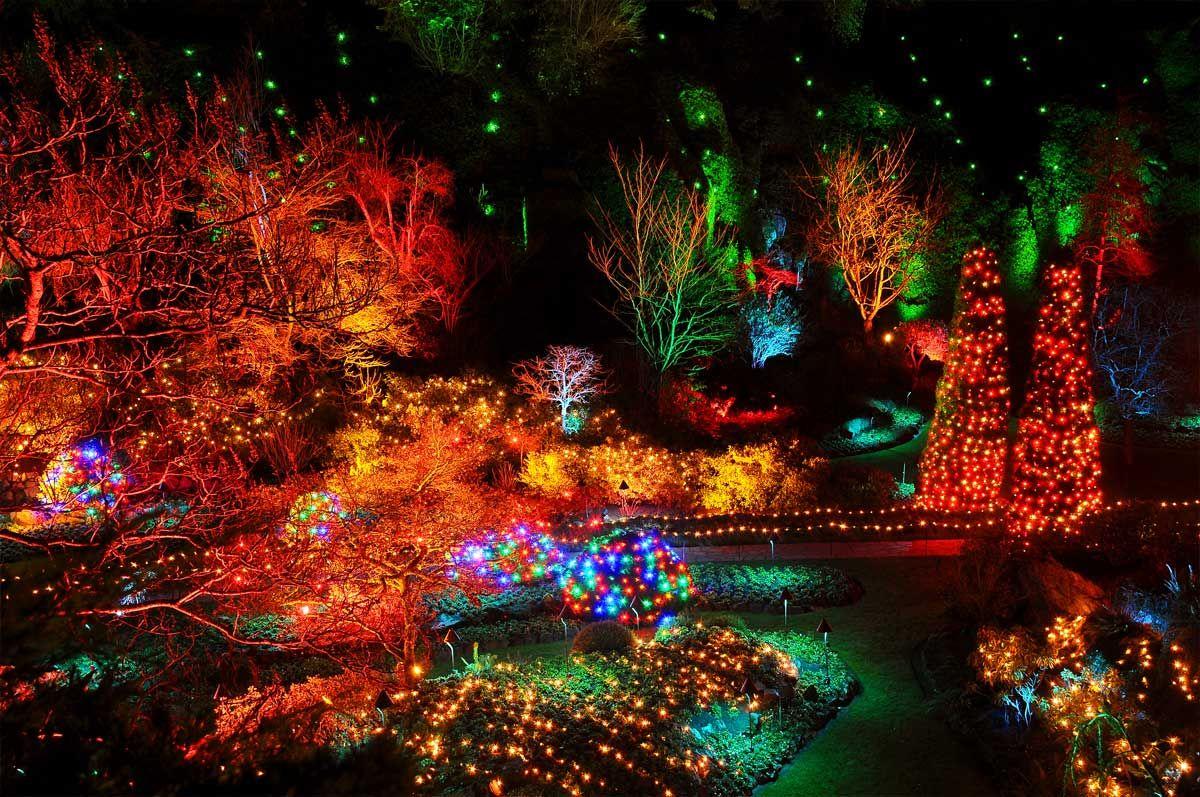 589803a9c8b4ebb647d2c7e5883a203c - The Butchart Gardens Christmas Lights Tour
