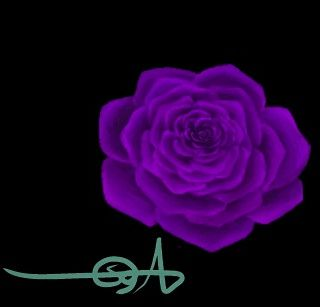 وردة الجوري بنفسجية Rose Plants Flowers
