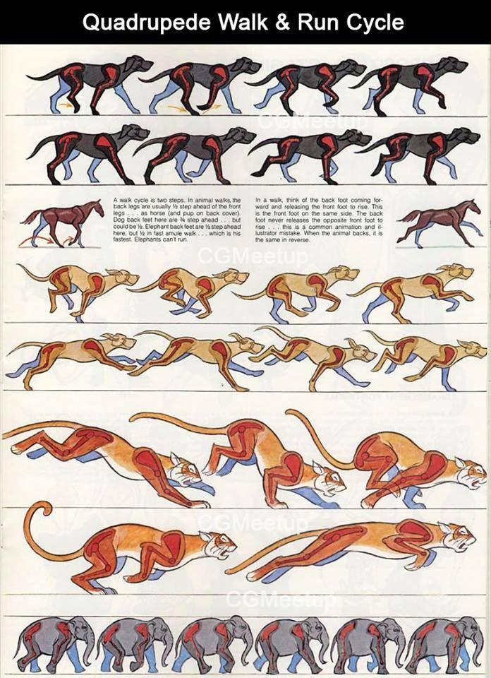 Ciclos de animação | CHARACTERS DESIGN | Pinterest | Anatomía animal ...