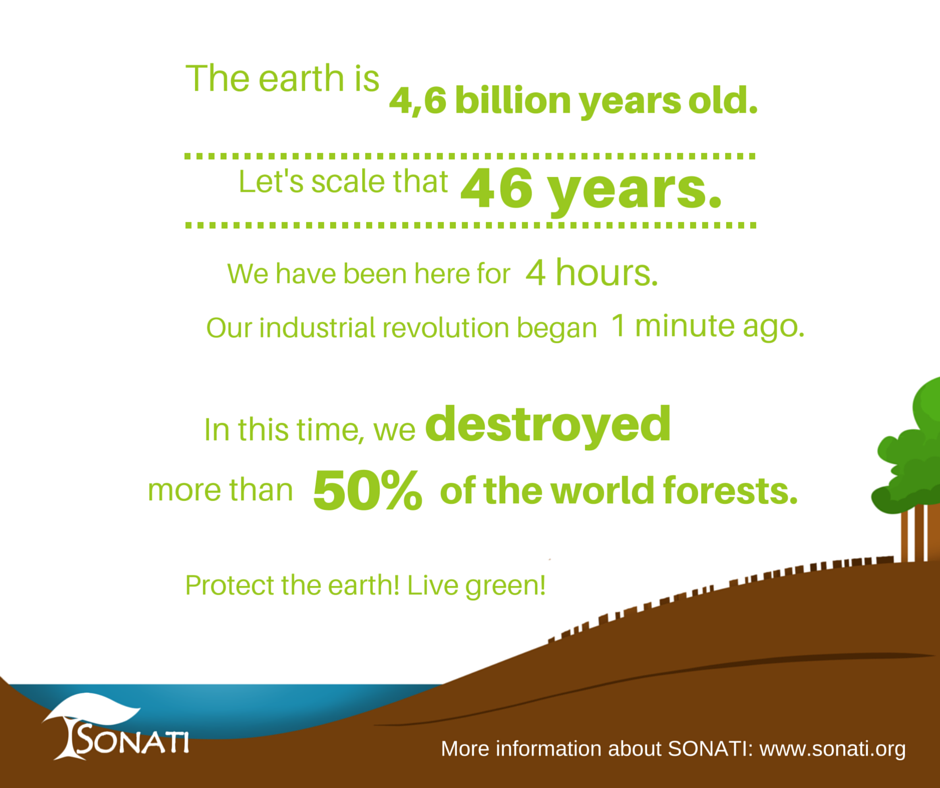 We already destroyed over 50% of the world's forests! www.sonati.org #forest